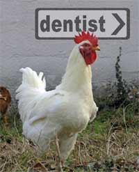 Photo of hen - going to the dentist?